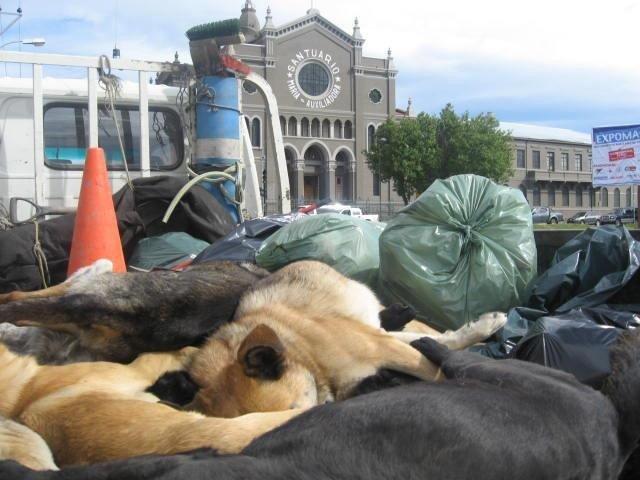 Las declaraciones del Obispo de Punta Arenas Sr. Bernardo Bastres, fuertes, irresponsables y carentes de amor, en contra de los perros abandonados, al parecer surgieron efecto en algunos feligreses. Quien dirige una comunidad debe ser responsable de lo que dice, y no incitar al odio y la violencia.