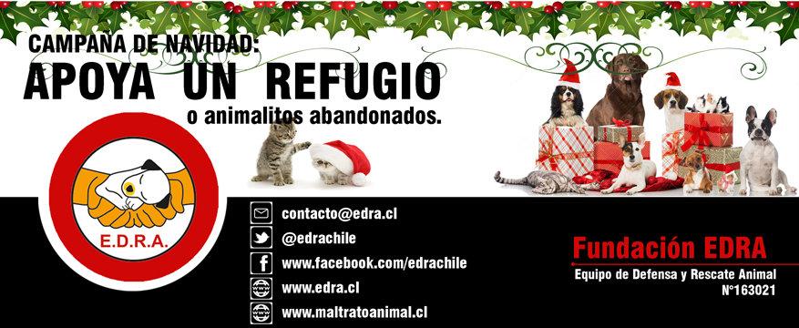 banner campaña navidad EDRA 4