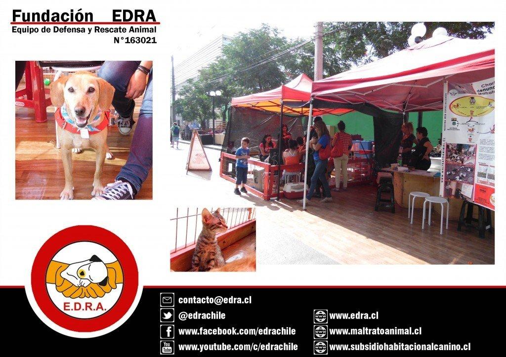 Adopciones Non Stop EDRA