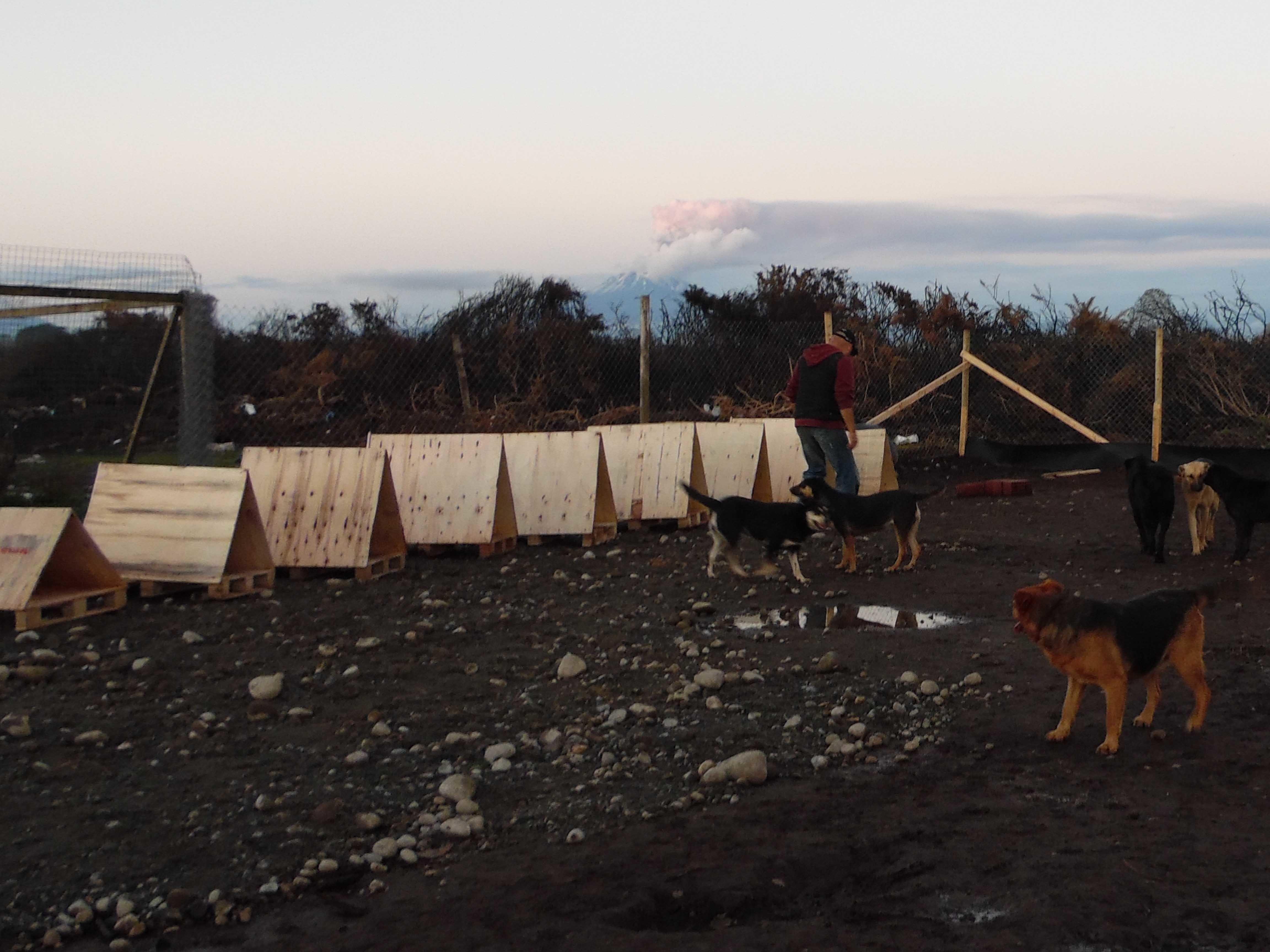 Subsidio Habitacional Canino en Pto Montt por el Volcán