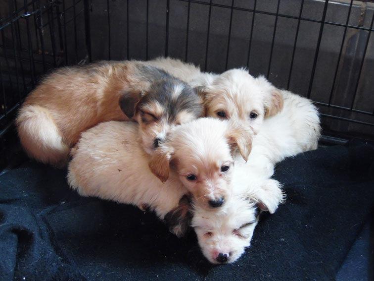 25 cachorros en una caja: No los vendieron para el día del niño y los abandonaron.