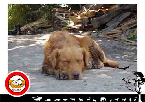 Nuevamente en el abandono: el desalojo de un sitio y el regreso a la calle de los perros que en el se cobijaban