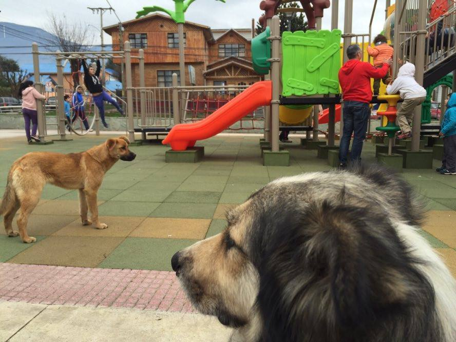 Corte de Apelaciones de Coyhaique ordena el retiro de todos los perros de la calle en 7 Días.