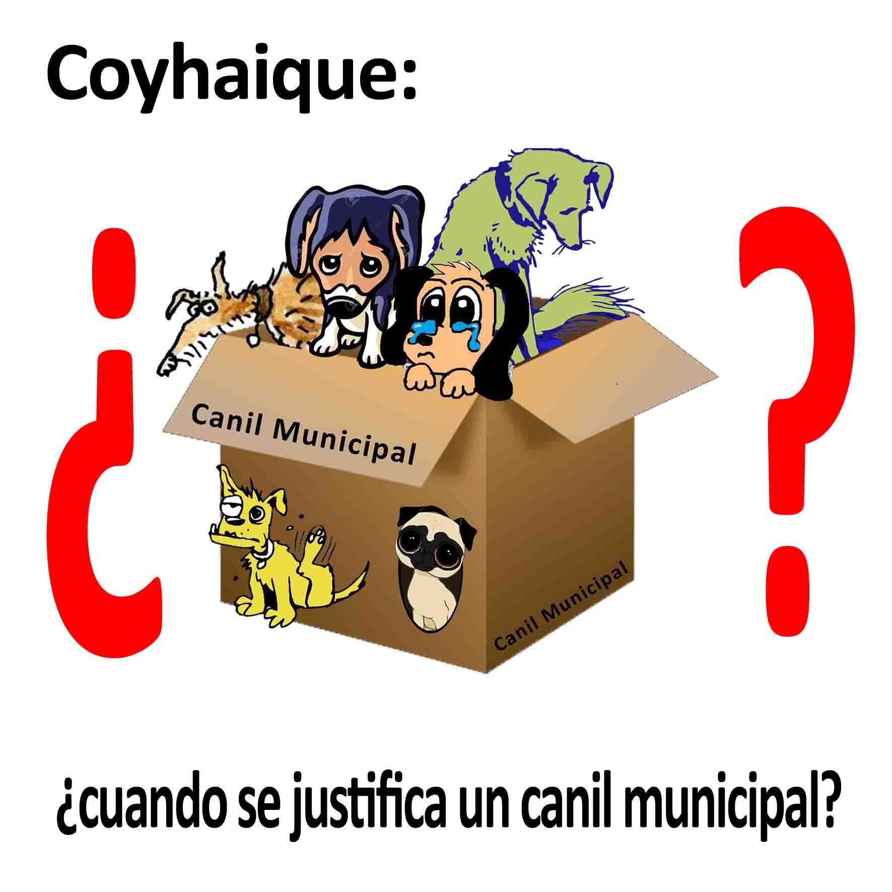 Coyhaique: ¿en que casos se justifica un canil municipal?