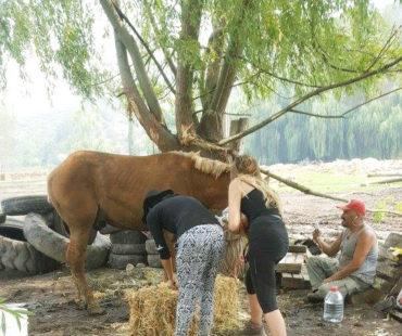 ¡¡Misión cumplida!! Luego de una semana intensa, dejamos montado el Refugio de Emergencia de Animales Mayores REAMA
